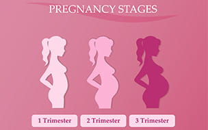 pregnancy stages